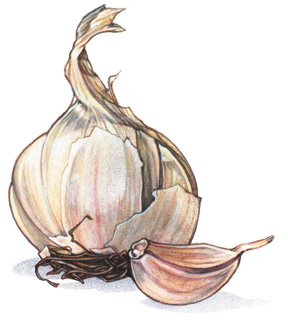 Garlic For Overall Health