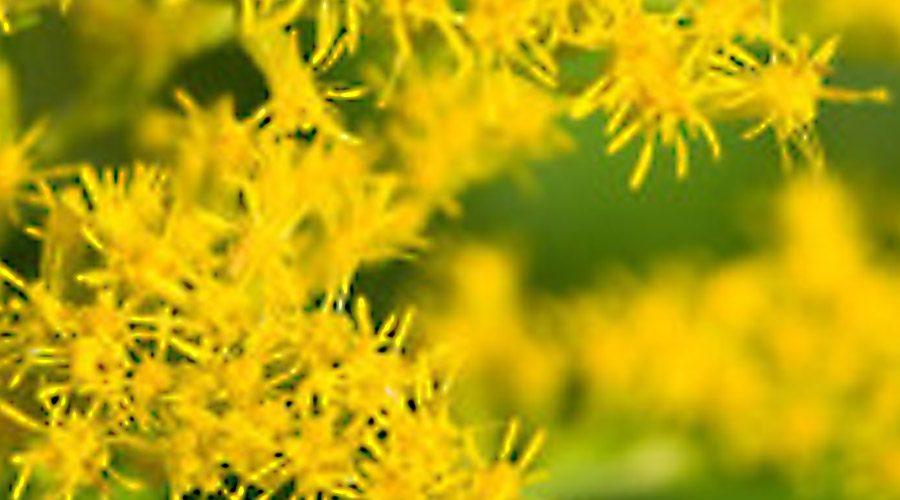 Allergies Sensory Overload