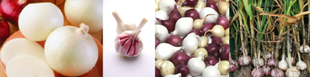 Garlic & Onion Trivia